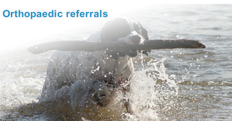 Orthopaedic referrals